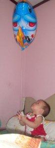 balon raja ikan 2