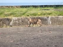 kucing di tepi pantai manado